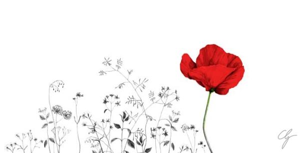 Illustrazione papavero nel giardino