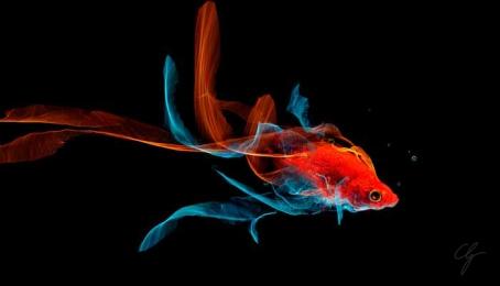 Illustrazione pesce fluttuante con Silk app
