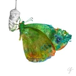 Illustrazione farfalla rinascita