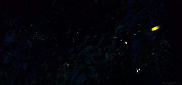 lucciole in giardino