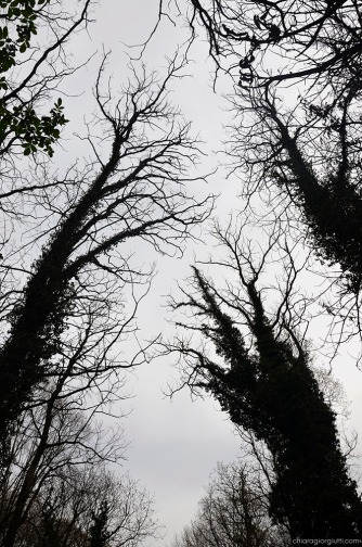 bosco stregato