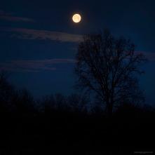 paesaggio notturno con luna