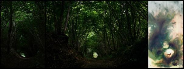 Da foto a illustrazione bosco e volpe