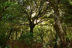 luce del sole tra alberi di bosco umbro