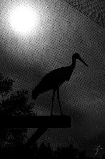 silhouette cicogna dietro la rete