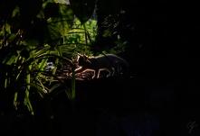 silhouette controluce di gatto tra le piante
