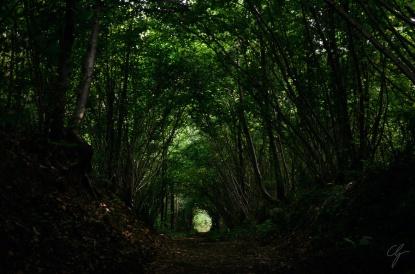 sentiero di campagna con rami a tunnel